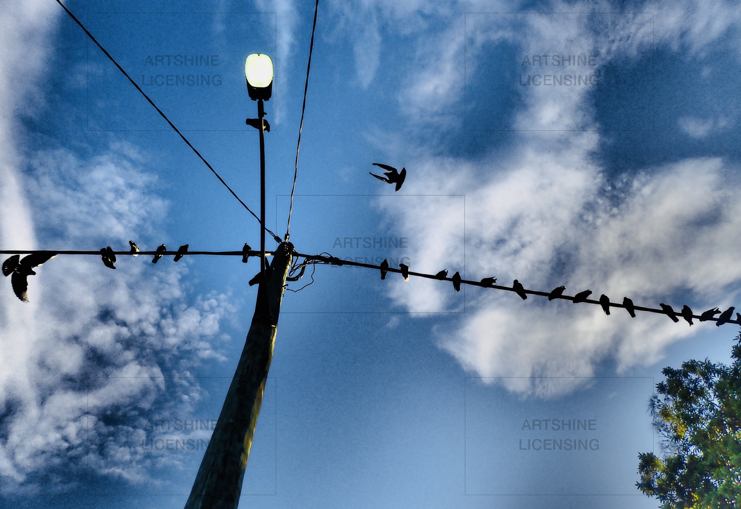 Birds on a wire #3