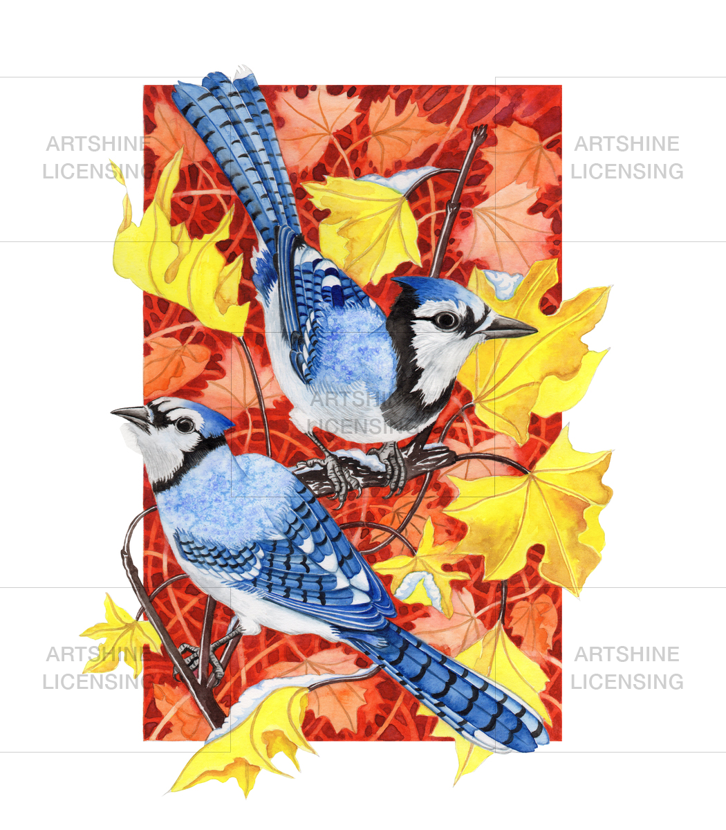 Bluejays in maple