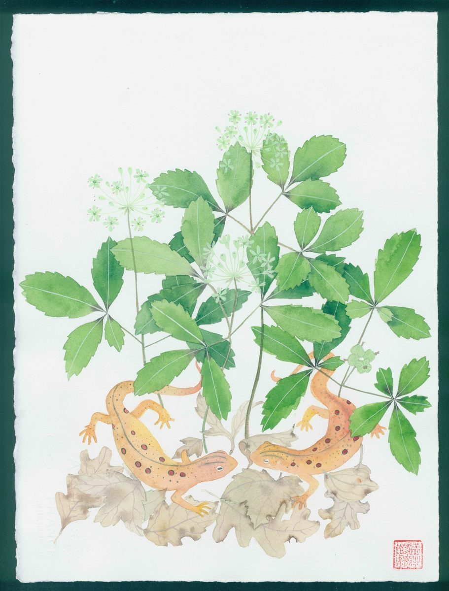 New Hampshire artwork: newts and american ginseng