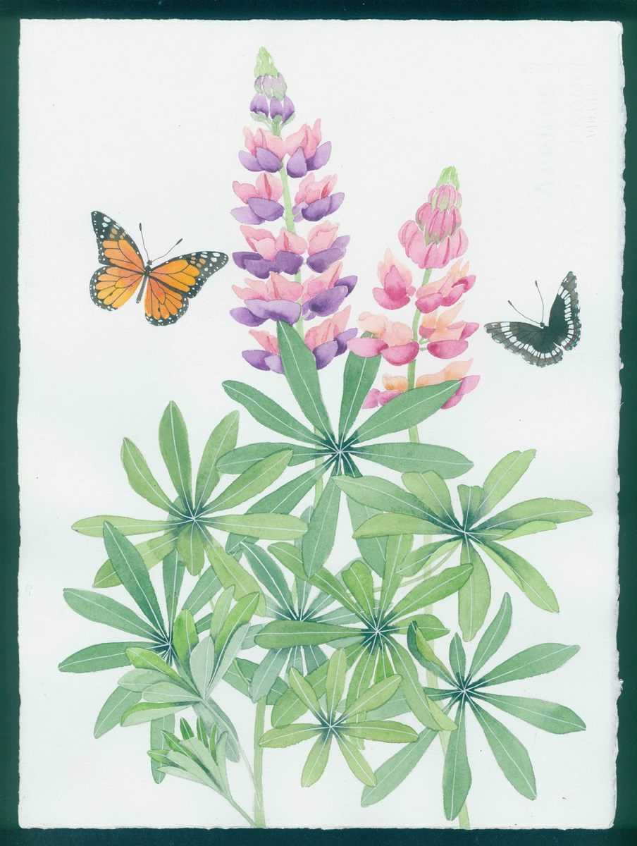New Hampshire artwork: lupins