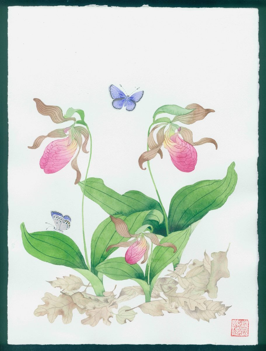 New Hampshire artwork: native slipper orchids and common blue butterflies