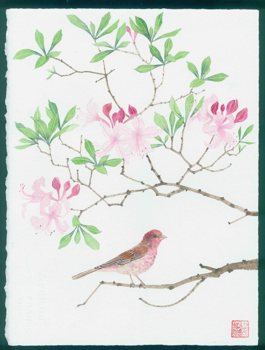 New Hampshire artwork: native rhododendron